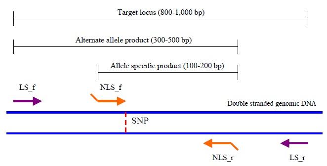 Outline of primer design for TSP